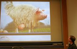 egg laying wool milk pig